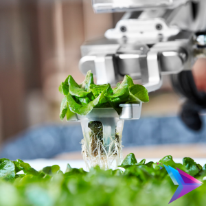 Image of robot arm moving farm produce.